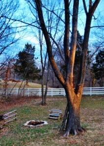 Spy Garden Backyard Firepit
