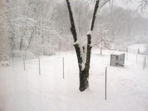 Spy Garden in Snowstorm