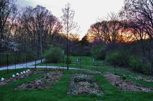 Spy Garden Spring Sunset
