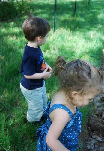 Garden observations