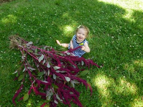 2012 Hartman's Giant Amaranth