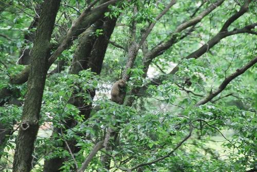 I Spy a Woodchuck climbing a tree!