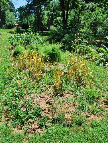 Garlic Patch: Before