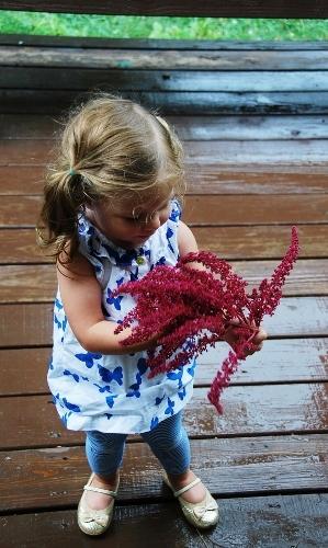 Examining an amaranth seedhead
