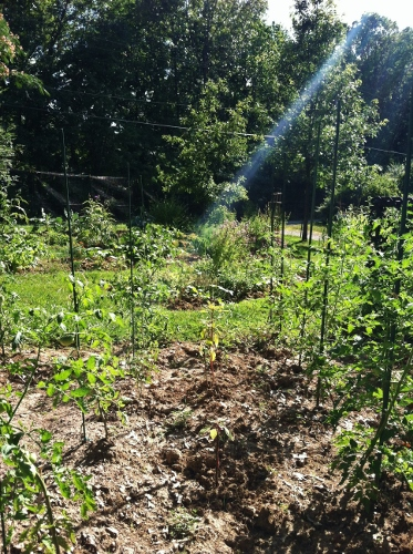 Note the ray of light NOT shining upon the tomato patch in the foreground hahahhaa