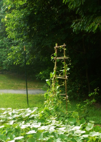 Obelisk with lemon cucumbers