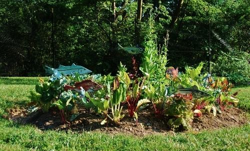 "The same ""canvas"" July 13, 2013; a garden southwest Florida habitat!"