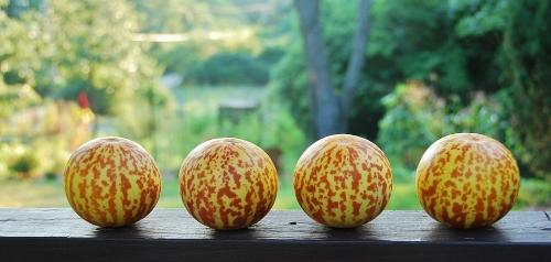 Tigger Melons