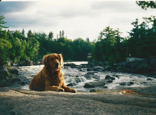 Maddie hanging at the Cribworks on the Penobscot River, ME