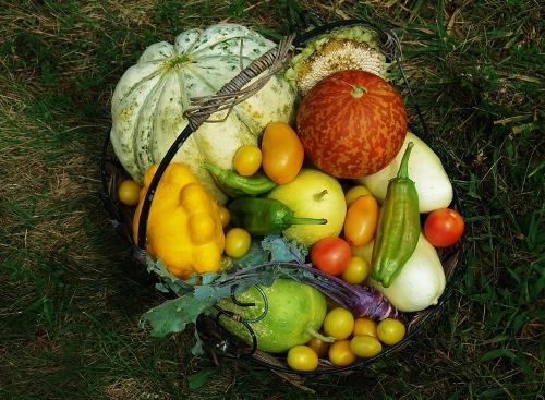 Harvest du Jour!