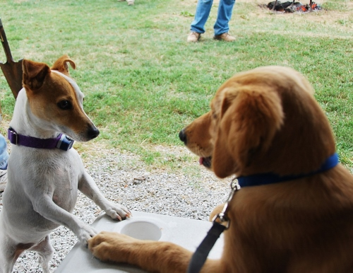Lilly and Dexie discuss apple butter