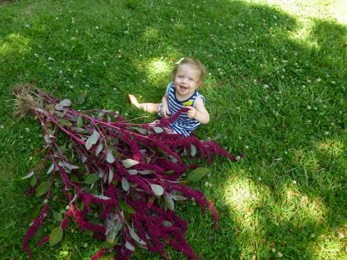 Hartman's Giant Amaranth