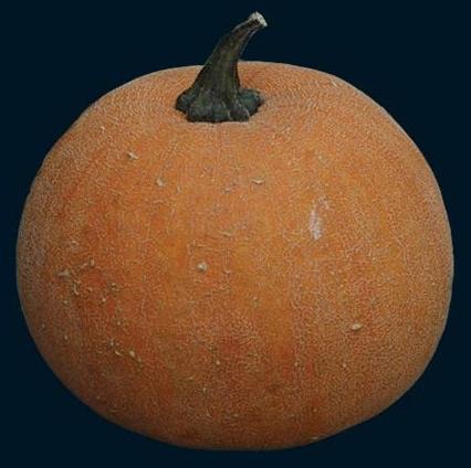 winter lux pie pumpkin (426x424)