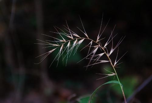 A firework of grass