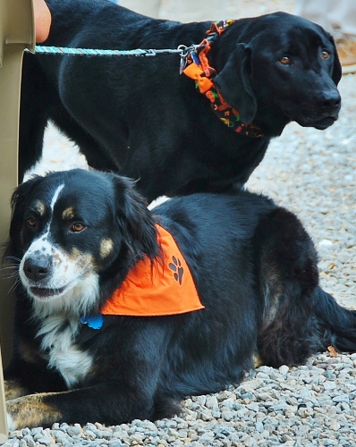 Dogs with Halloween garb!