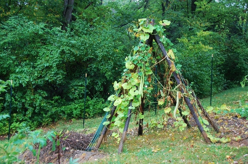 Teepee (can you spot the serpent gourds?)