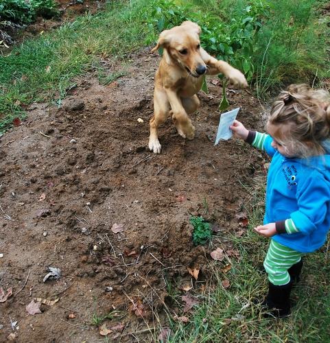 Arugula Planting