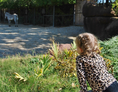 Baby's favorite were the zebras.