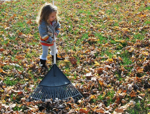 Baby likes raking too!