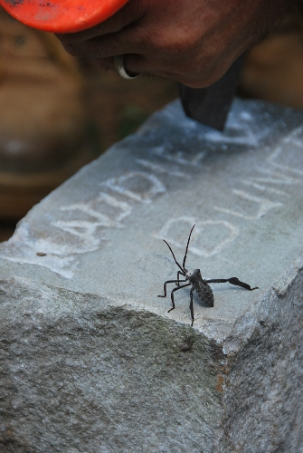 This bug was there the whole time while my husband engraved her headstone.
