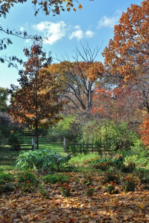 Spy Garden Fall 2012