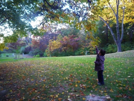 Before the leaves fall (2010, you can barely see the garden, it was so much smaller then!)