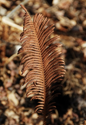 I loved the look of these ferns
