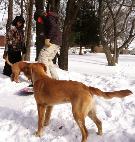 Dogs are welcome on our bunny slopes!