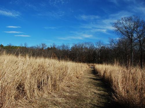 Shaw Nature Preserve