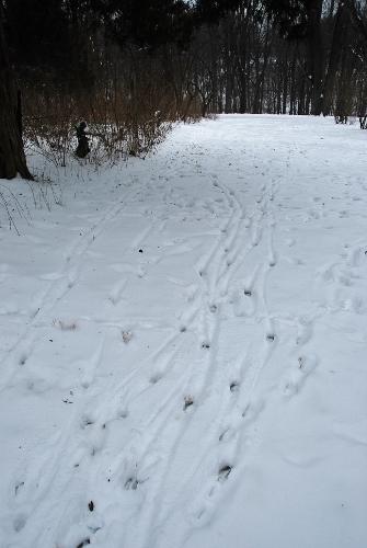 Лыжные трассы?