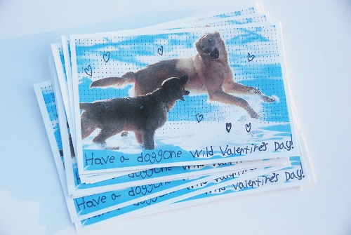 """Have a doggone wild Valentine's Day!"""