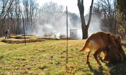 The dogs know all about the art of warfare.