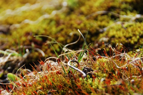 ...feeling the soft, springy moss.