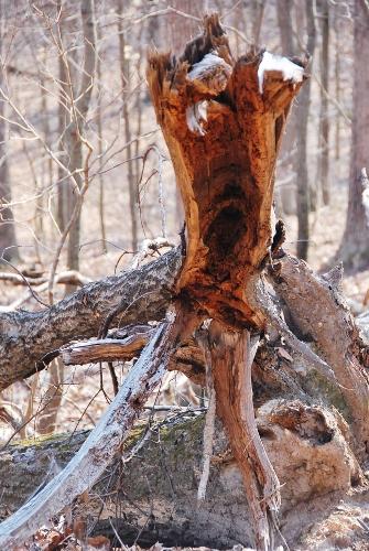 ...a fallen tree...
