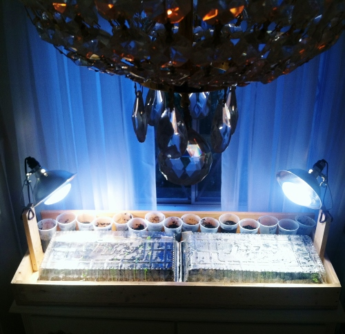 Seedling Setup in Babyzilla's Room