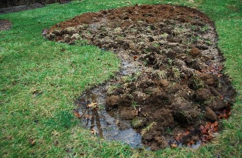 Quivering puddles a la Jurassic Park
