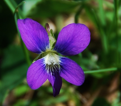 Including loads of these tiny purple flowers.