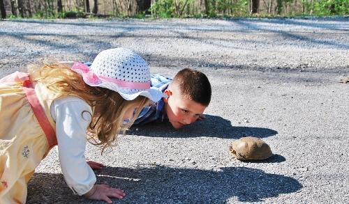 I spy a box turtle