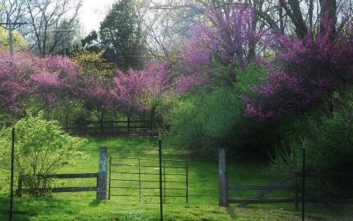 Beyond the Deer Fence