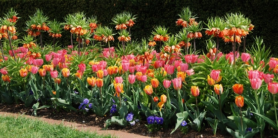 Tulips are Spy Garden's official favorite flower.