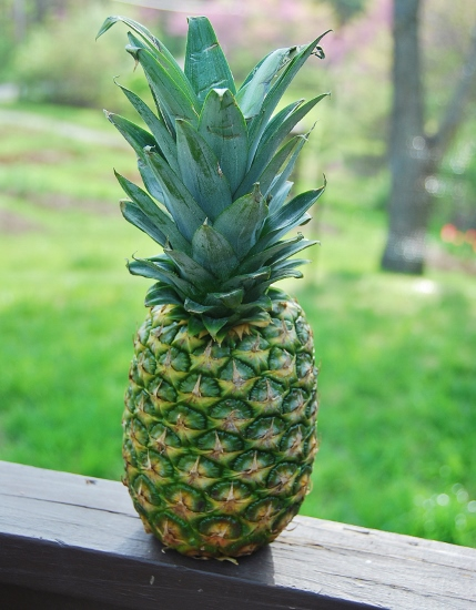 No ordinary pineapple