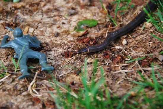 Sneak (or Snake?) Attack!!!