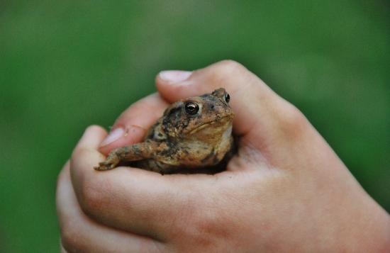 Monsieur Toad