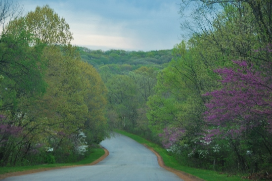 A drizzly drive through Babler State Park