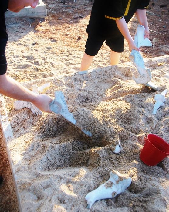 Digging for bones