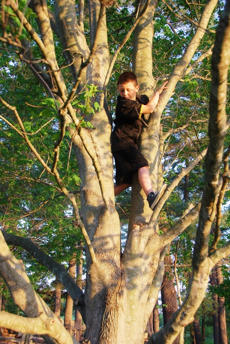 And the Spy too, balancing in a tree...