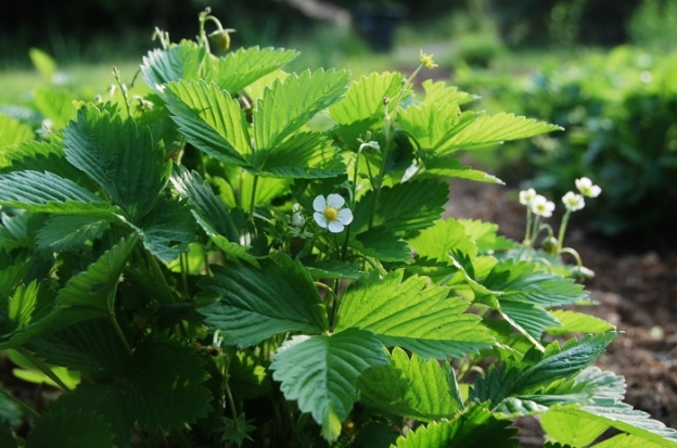 Pretty yellow strawberry plants