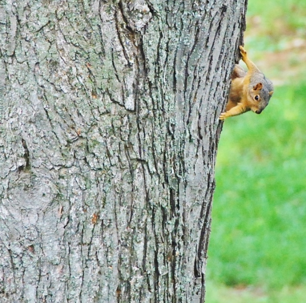 Things are a little squirrely here too!