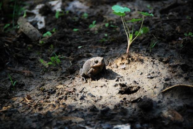 Toad in Spotlight