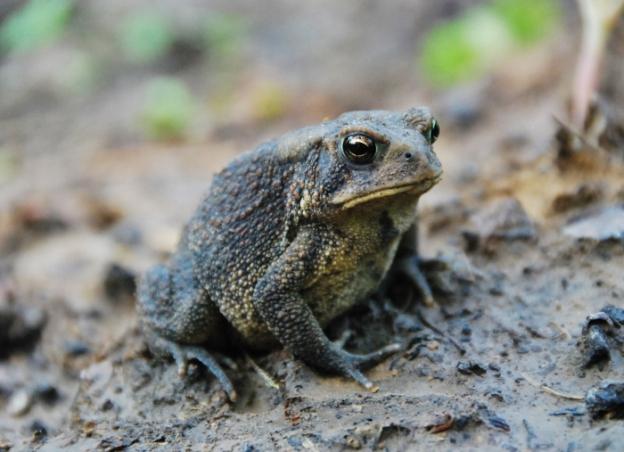 Toad Three-Quarter Profile